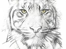 drawn cubism tiger pencil and in color drawn cubism tiger
