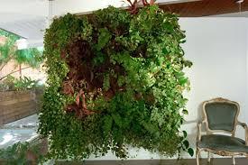 wally three wall planters indoor outdoor woolly pocket