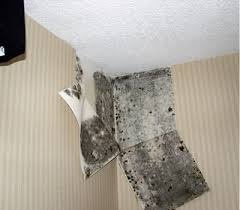 How To Stop Mold In Basement by All About Mold Problems In Houses Decker Home Inspection Services