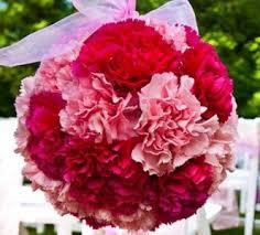 carnation flowers hanging carnation flower pink white purple orange