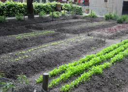 square foot better for planting square foot gardening vs row gardening