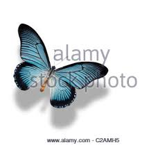 butterfly with shadow against white background 3d illusion stock