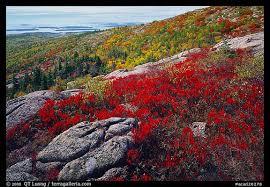 picture photo shrubs autumn color granite slabs