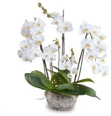 Wholesale Silk Flower Arrangements - phalaenopsis orchid arrangement large white transitional