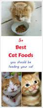best 25 best cat food ideas on pinterest homemade cat food