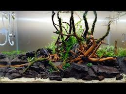 aquascaping layouts with stone and driftwood aquascape ada cube garden 60p bank of river ada sansui stones