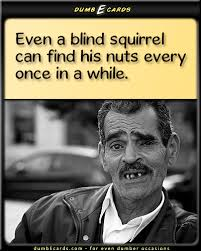 squirrel nuts dumbecards com for even dumber occasions funny