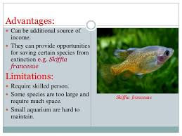 ornamental fishes and maintainance of aquculture by irfan paswal