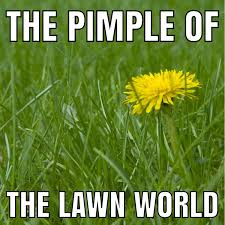 Grass Memes - lawn memes page 20 the lawn forum