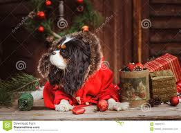 cute funny dog celebrating christmas and new year with decorations
