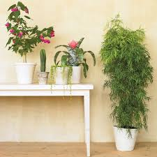 6 common houseplant problems and what to do about them martha