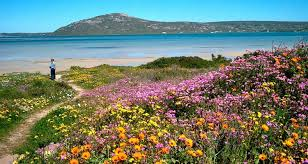 flower places the 9 best places to view the cape s wildflowers the inside guide