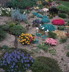 Rock Gardens Images by Hard Landscape Rock Gardens
