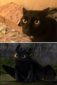 10 black cats toothless disguise bored panda