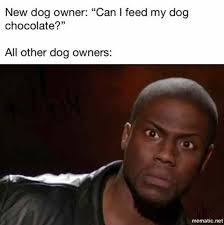 Chocolate Meme - can i feed my dog chocolate kevin hart meme funny pictures