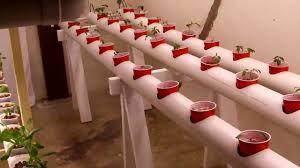 basement hydroponics project youtube
