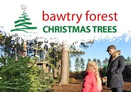 Natural Christmas Tree For Sale - christmas trees at bawtry forest doncaster yorkshire and botany