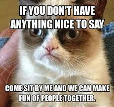 Unhappy Cat Meme - 2328 best grumpy cat images on pinterest funny stuff funny