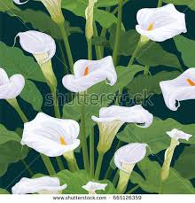 Calla Lily Flower Seamless Pattern Calla Lily Flowers Leaves Stock Vector 665126359