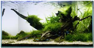 Aquascaping With Driftwood Aquascape Of The Month November 2009