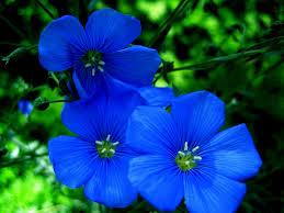 Blue Flower Backgrounds - blue flower wallpaper 1600x1200 73813