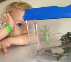 science experiment insect study how wee learn