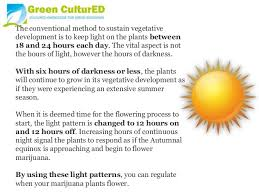 Light Cycle For Weed Flowering Marijuana And Light Cycles