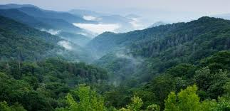Tennessee forest images Tennessee wilderness southern environmental law center jpg