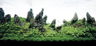 Aquascape Takashi Amano Aquascaping With Ryuoh Seki Stones Details Articles Tfh