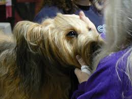 industry professionals render their very top advice on best way to stop biting nails 7 ways to know if your dog is bonded to you rover com