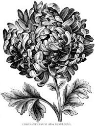 Flower Drawings Black And White - flores laminas para transferencias pinterest coloring