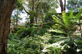 backyard garden ideas australia backyard and yard design for village