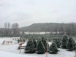 Christmas Eve At Maple Hollow Farm Maple Hollow Christmas Tree Farm