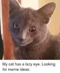 Lazy Eye Meme - my cat has a lazy eye looking for meme ideas funny meme on me me
