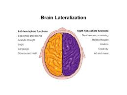 Which Part Of The Brain Consists Of Two Hemispheres Chapter 5 Body Brain And Health Ppt Video Online Download