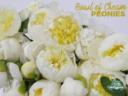 Peonies Season Get Ready To Have Major Peony Envy U2013 Jet Fresh Flowers Blog