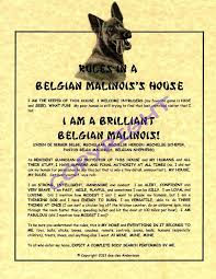 belgian malinois size at 6 months rules in a belgian malinois u0027 house dog lover pinterest