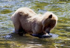 Alaska wildlife tours images Chilkoot lake wildlife viewing tour to haines alaska shore jpg