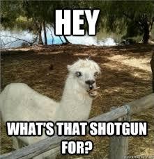 Alpaca Meme - oblivious alpaca memes quickmeme