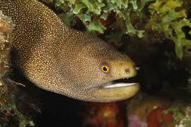 Seeking Eel Eel