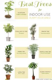 best trees for indoor use going home to roost