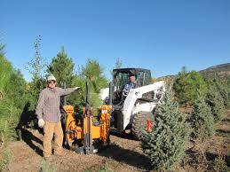 wholesale hardy trees shrubs plants high plains nursery