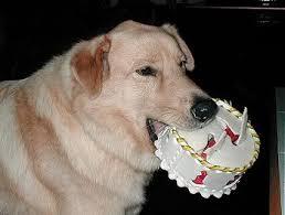 Birthday Cake Dog Meme - woohooo my birthday 22 today that