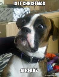 Christmas Dog Meme - is it christmas already skeptical dog make a meme