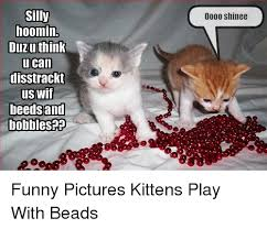Funny Kitten Memes - 25 best memes about shinee funny shinee funny memes