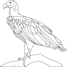 vulture coloring pages free page king turkey king vulture coloring