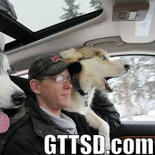 Siberian Husky Meme - tag archive for meme gone to the snow dogs siberian husky love
