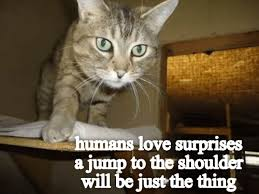 Wanna Bet Meme - wanna bet lolcats lol cat memes funny cats funny cat