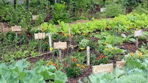 how to start a vegetable garden 8 steps to success stuff co nz