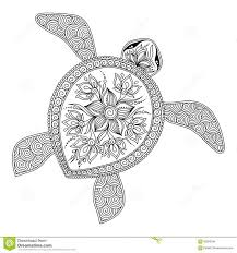 113 turtles images amphibians reptiles